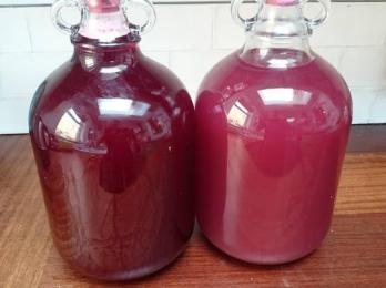 SLOE WINES recipes in archive