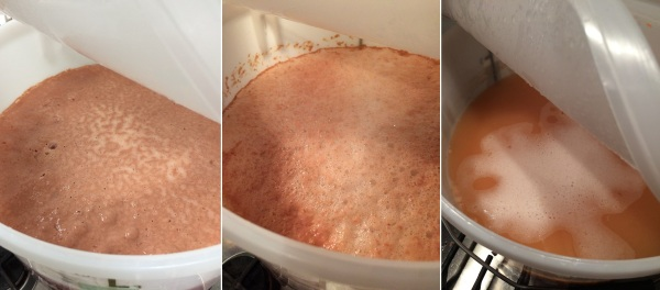 Strawberry and Rhubarb ferment master